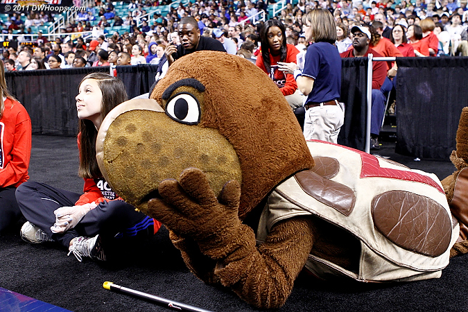 Maryland mascot Testudo the Terrapin prone on the sidelines