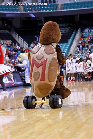 DWHoops Photo  - MD Players: Mascot Testudo